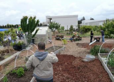 Hayward Community Garden