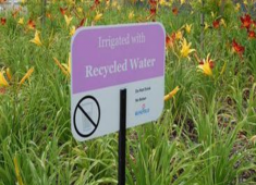 Landscaping irrigated with recycled water.