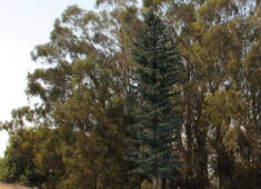 Cell tower that is designed to look like a pine tree and provides co-location opportunities for multiple service providers.